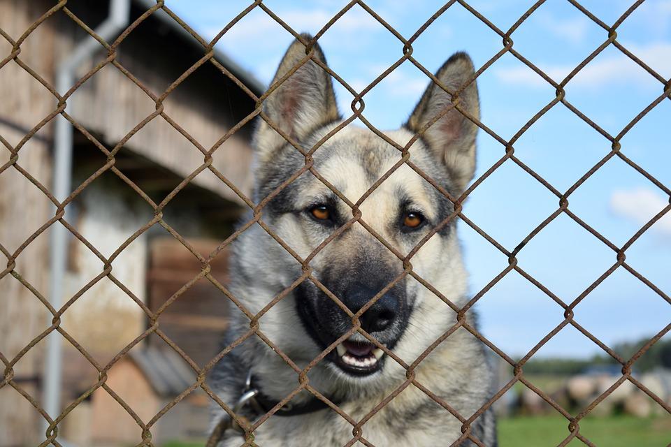 Un chenil ou enclos pour votre chien